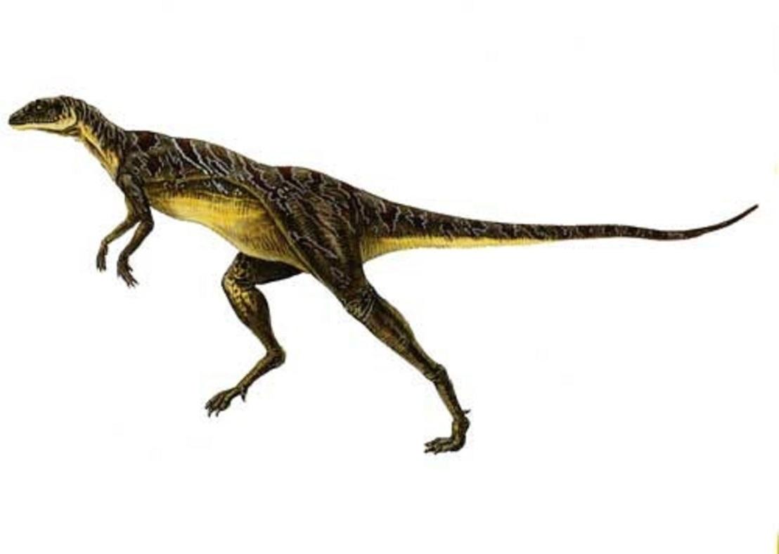 Dinosaur Profile: Lesothosaurus