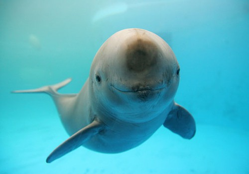 Classifying by Kind: Porpoises, Whales andDolphins