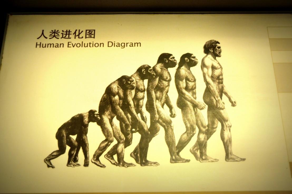 Why Evolution BreedsRacism
