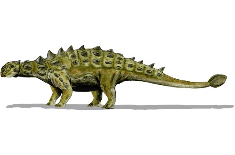 Dinosaur Profile: Ankylosaurus