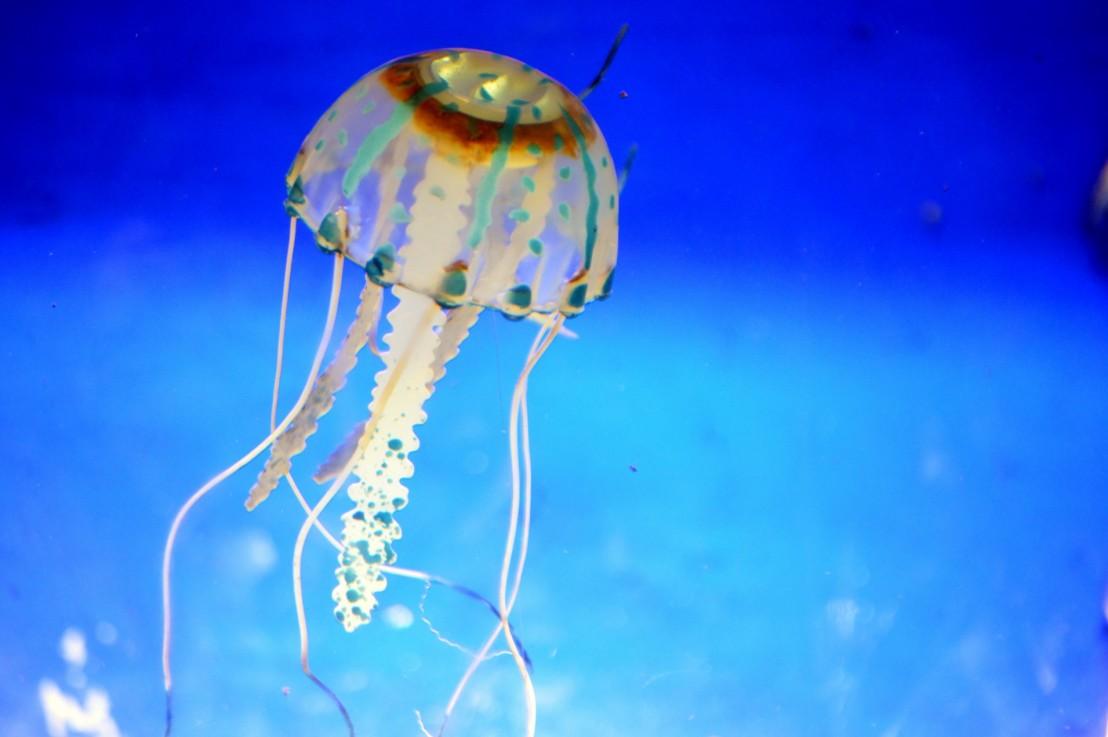 Jellyfish Part 2 DefyingEvolution