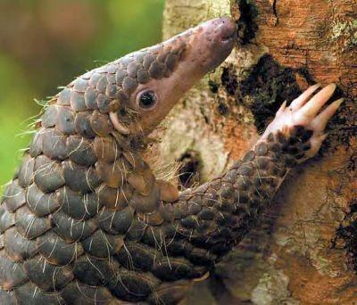 Pangolin: Breaking Patterns