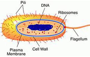 The Cell: Prokaryotic
