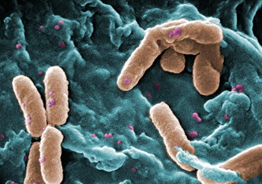 Microbes and Antibiotics