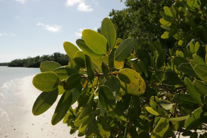 Photosynthesis: The Purveyor ofLife