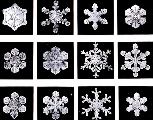 Snowflake: The beauty of winter