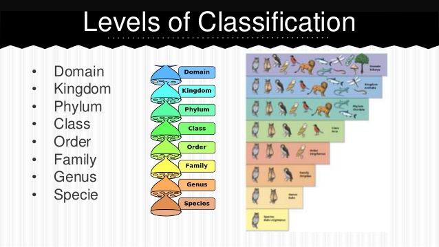 Classifying by Kind