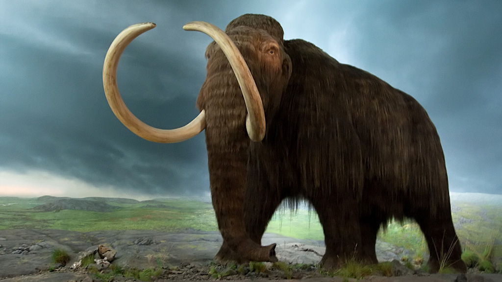 Quick Freeze: Mammoths on Ice