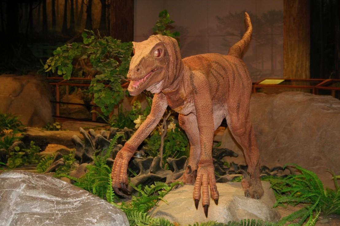 Dinosaur Genome?