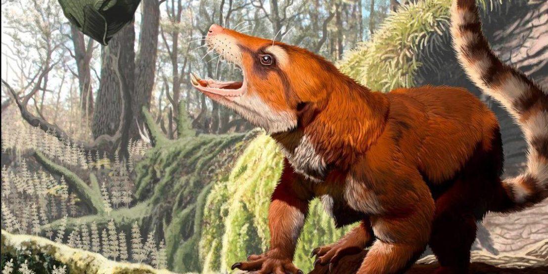 Cifelliodon