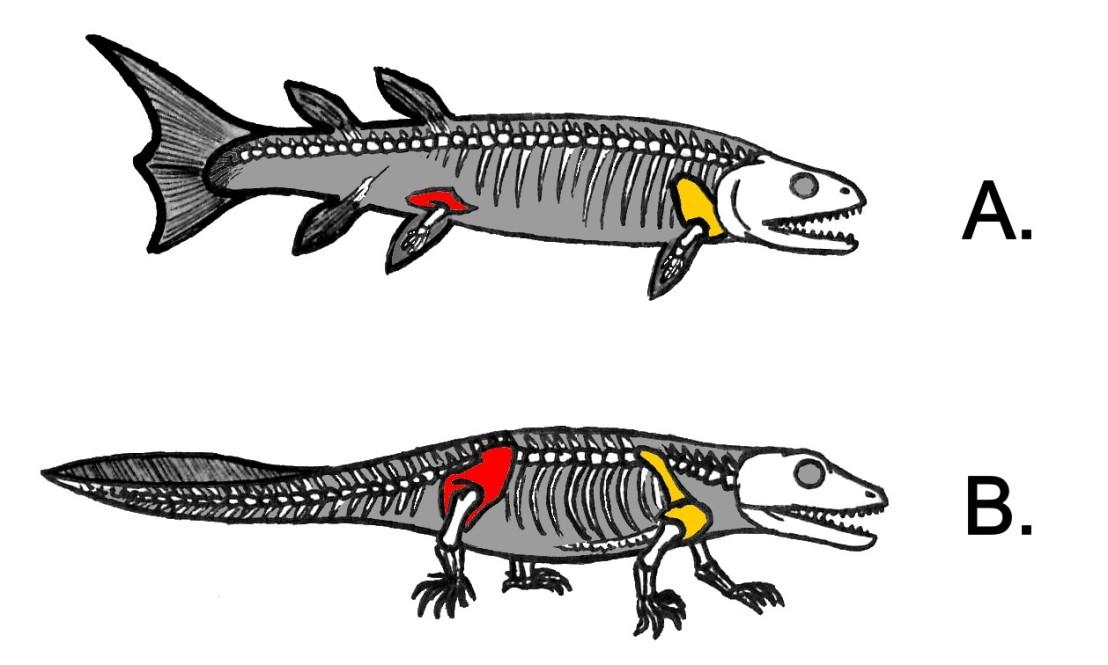 Antartic Tetrapod