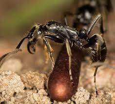 Ant Medics
