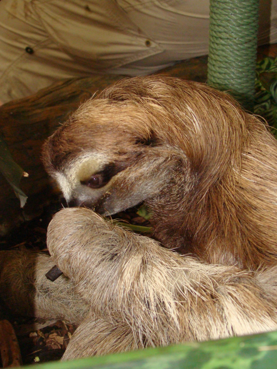 Sloths: Giving New Meaning to Slow