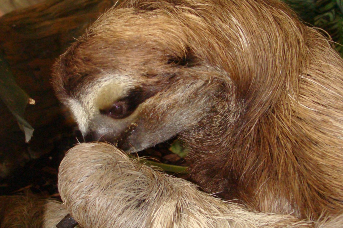 Sloths: Giving New Meaning toSlow