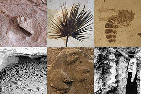 Rapid Fossils