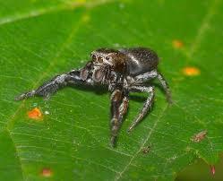 Spiders: Very Good?