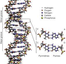 DNA and Information Code