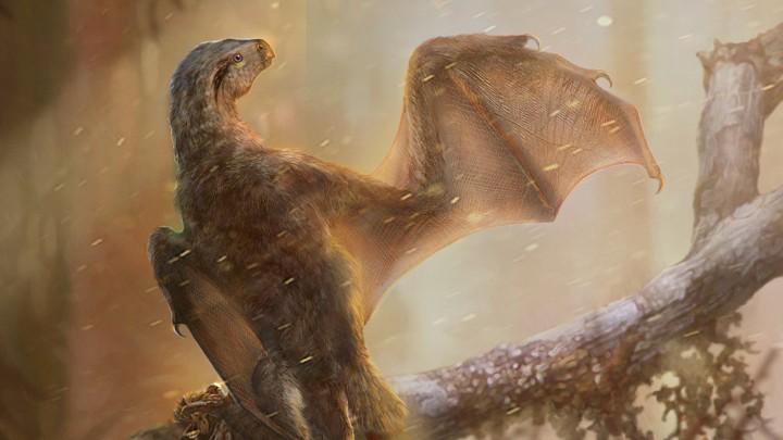 Ambopteryx: Bat WingDino?