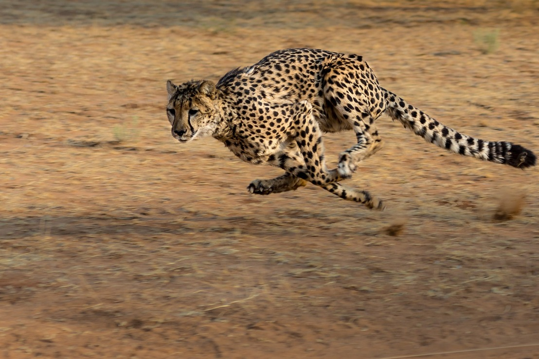 Cheetah: Fast byDesign