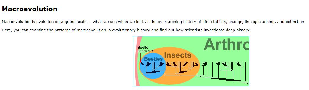 UC Berkley macroevolution